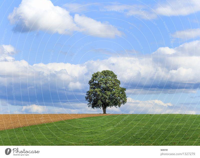 Der Baum Umwelt Natur Landschaft Pflanze Wolken Sommer Klima Wetter Schönes Wetter Blatt Wildpflanze Feld Holz Zufriedenheit Lebensfreude ruhig Wahrheit