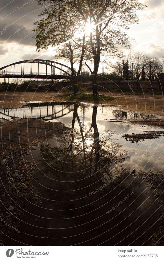 Spiegelung Baum Reflexion & Spiegelung Mittag Brücke Erde Sand Sonne Beleuchtung Wasser Himmel