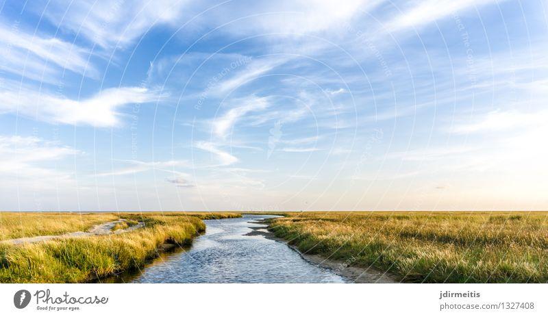 Landschaft Ferien & Urlaub & Reisen Sommer Sommerurlaub Umwelt Natur Pflanze Himmel Wolken Schönes Wetter Gras Küste Nordsee Bach Fluss St. Peter-Ording