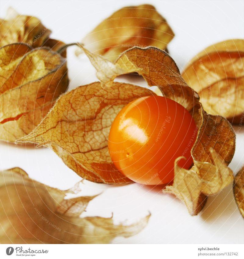fresh and fruity Natur Blatt Ernährung braun orange Gesundheit Lebensmittel Frucht frisch süß mehrere rund Dekoration & Verzierung zart Wut Kugel
