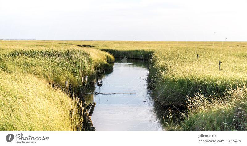 Siel Natur Ferien & Urlaub & Reisen Landschaft Umwelt Wiese Küste Tourismus Ausflug Flussufer Nordsee Sommerurlaub Bach Sumpf Moor