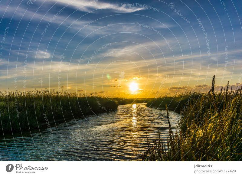 Sunset Umwelt Natur Landschaft Pflanze Wasser Himmel Wolken Sonne Frühling Sommer Herbst Klima Wetter Schönes Wetter Gras Sträucher Küste Nordsee Bach Fluss