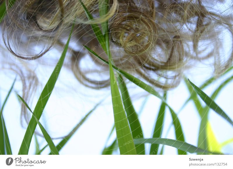 shakira shakira Himmel grün Sommer Gras Frühling Haare & Frisuren Feld Halm Locken Glätte Gegenteil lockig