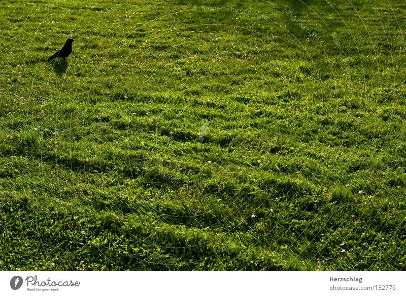 Das Minimale Maximum II grün schwarz Wiese Gras Frühling Vogel frei Erde frisch Gedanke Rechteck sehr wenige sehr viele