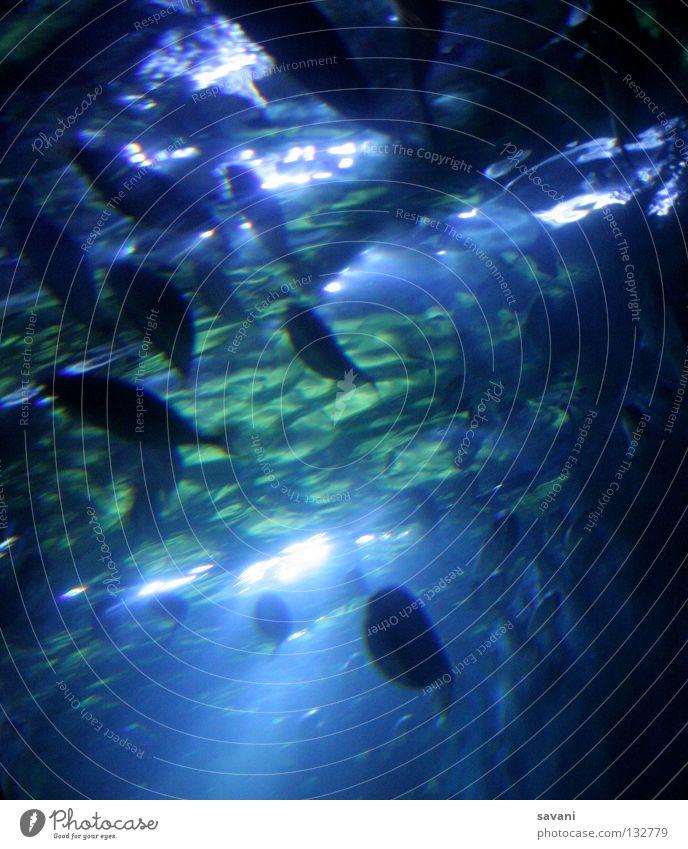 Fische unter Wasser Meer Wellen tauchen Aquarium Tiergruppe Schwimmen & Baden exotisch kalt nass blau grün Unterwasseraufnahme Unterwasseraquarium Silhouette