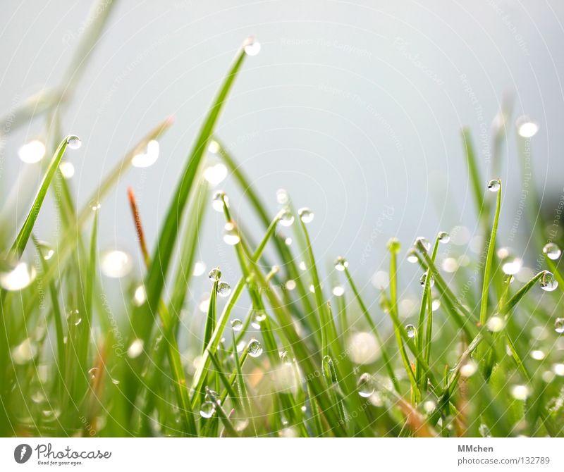 Im Frühtau zu Berge.... Natur Pflanze Wasser Sonne Leben Frühling Wiese Gras Lebensmittel Wassertropfen nass Bodenbelag Rasen Halm Tau feucht