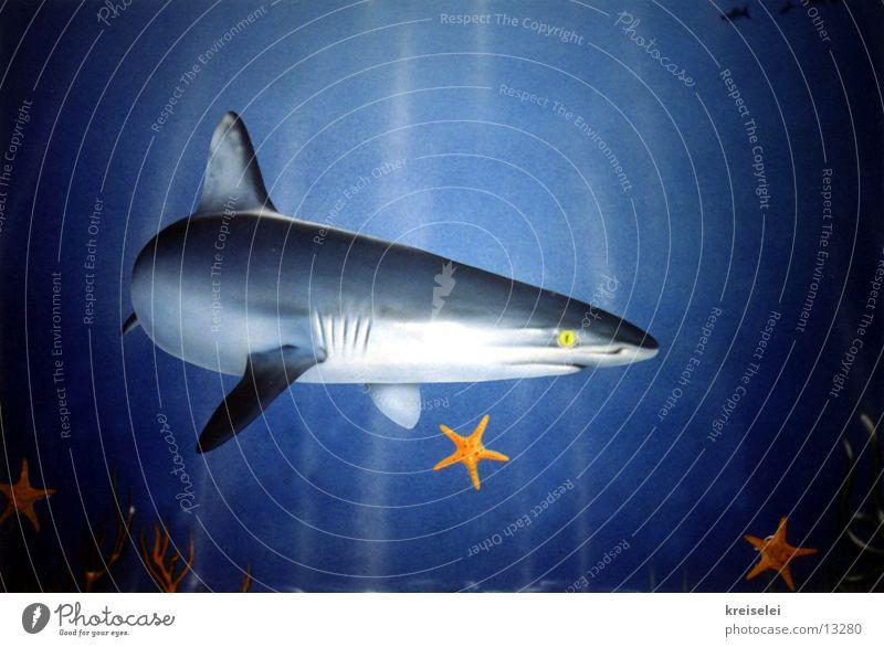Haiangriff Haifisch Wandmalereien Meer Verkehr Wasser Unterwasseraufnahme