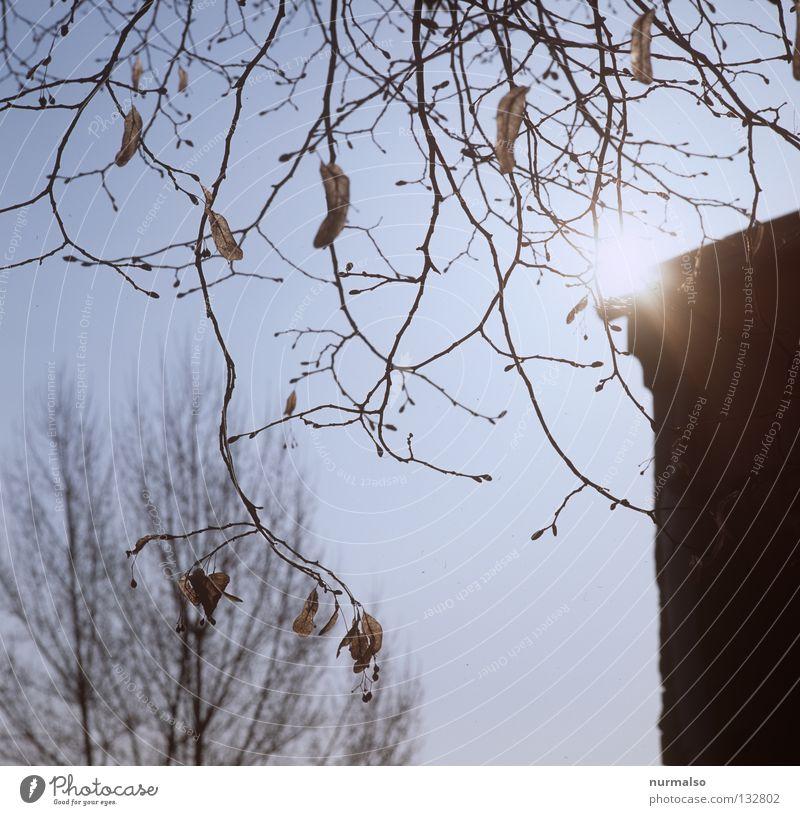 in diesem Moment schön Baum Sonne Frühling Freiheit Gebäude hell Stimmung frisch Seil Ecke Ast Sauberkeit Bauernhof Jahreszeiten Gedanke