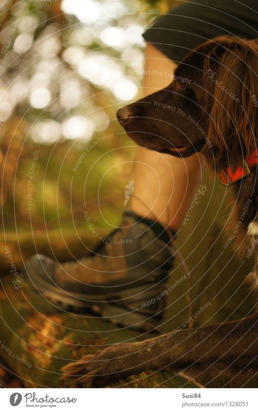 Wie der Pappa! Mensch Hund Natur Baum Tier Wald Erwachsene Beine Fuß beobachten Warmherzigkeit Baumstamm Vertrauen Partnerschaft Jagd Haustier