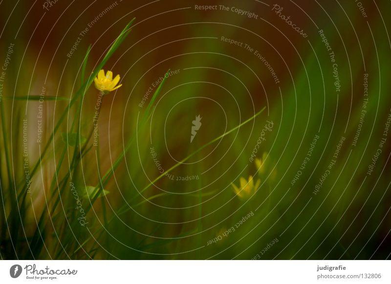 Wiese Natur grün Pflanze Blume Farbe Umwelt gelb Gras Frühling Blüte Bodenbelag weich Blühend zart verstecken