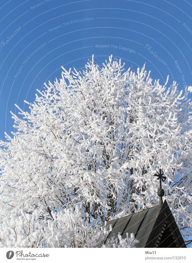 Raureif Winter kalt Religion & Glaube Kirche Kapelle Baum Schnee Eis weiß blau Kruzifix Kreuz Christliches Kreuz Gotteshäuser Religion u. Glaube
