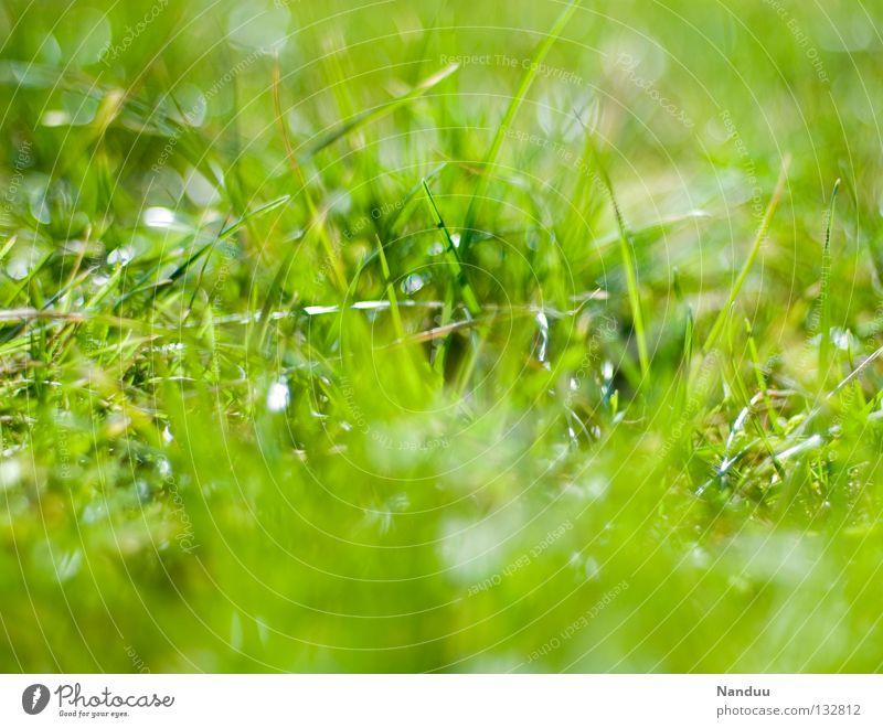 ungekämmt Wiese grün Sommer Frühling Unschärfe Gras Halm Tiefenschärfe frisch Wachstum Reifezeit saftig Schönes Wetter draußensein rumliegen gras wachsen hören