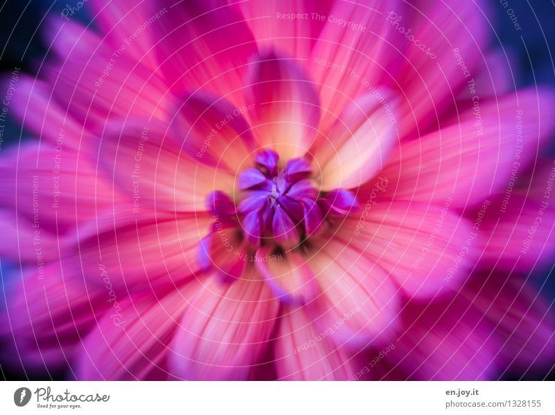 Bäääm Natur Pflanze schön Farbe Blume Leben Blüte rosa träumen Wachstum Kraft Geburtstag Fröhlichkeit verrückt Blühend Lebensfreude