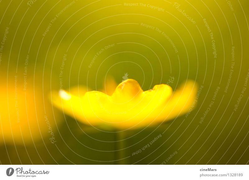 Butterblume im Gegenlicht Natur Pflanze grün schön Sommer Sonne Blume Landschaft Berge u. Gebirge gelb Wärme Blüte Wiese natürlich Glück hell