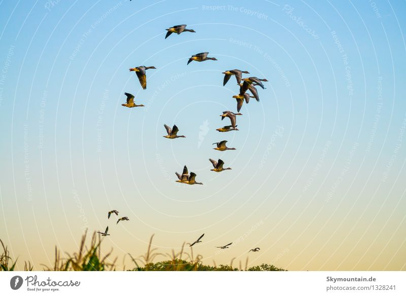 Deformationsflug Natur blau Tier schwarz Umwelt gelb Wiese natürlich Glück fliegen braun Vogel Horizont wild Feld gold