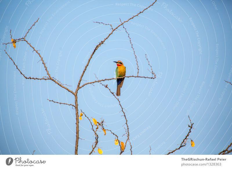Vogel blau grün rot Blatt Tier schwarz gelb fliegen braun Vogel elegant gold sitzen Ast Pause Schnabel