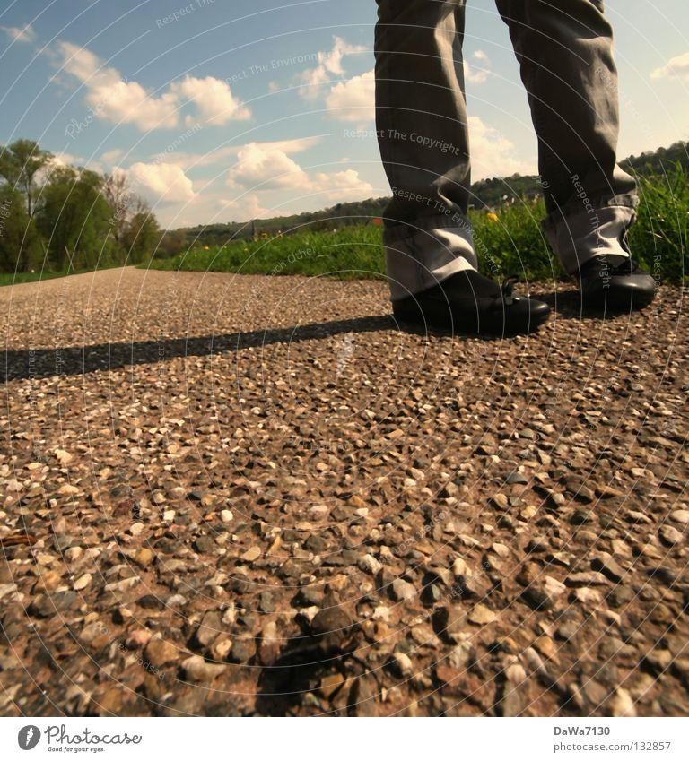 8 Bein Teer Sommer Wolken Wiese Beine Käfer Spaziergang