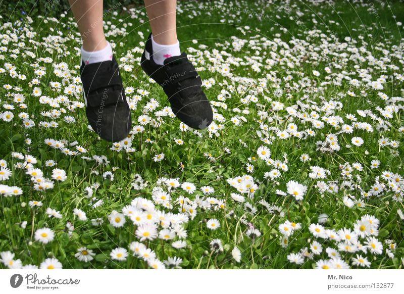 tritt nicht auf den Blütenteppich Mensch grün weiß Mädchen Freude Blume gelb Wiese Garten springen Gras Beine Schuhe fliegen Rasen