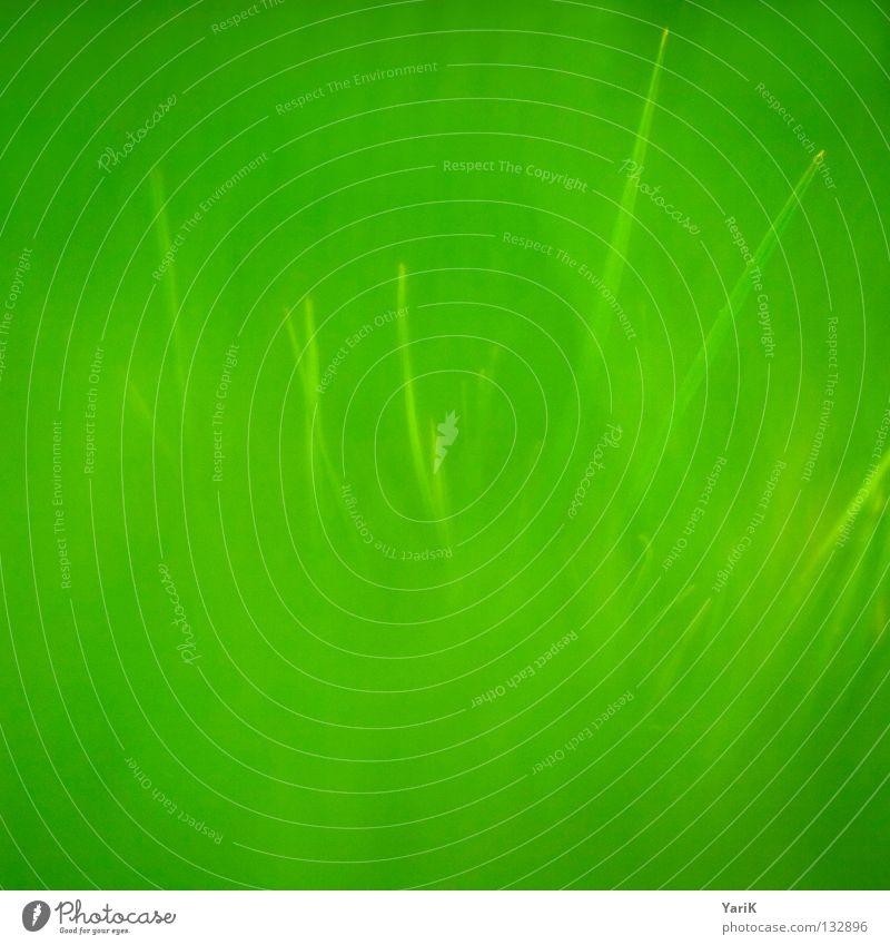 green Natur grün Pflanze Sommer Freude Ferne Wiese Gras Frühling Glück Kraft Hoffnung Fröhlichkeit Energiewirtschaft Rasen nah