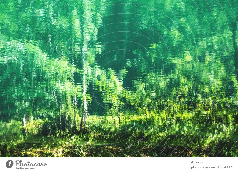 grünes Reich Urelemente Wasser Baum Birke Wellen Seeufer Teich nass träumen geheimnisvoll mystisch impressionistisch Eindruck malerisch tief Farbfoto