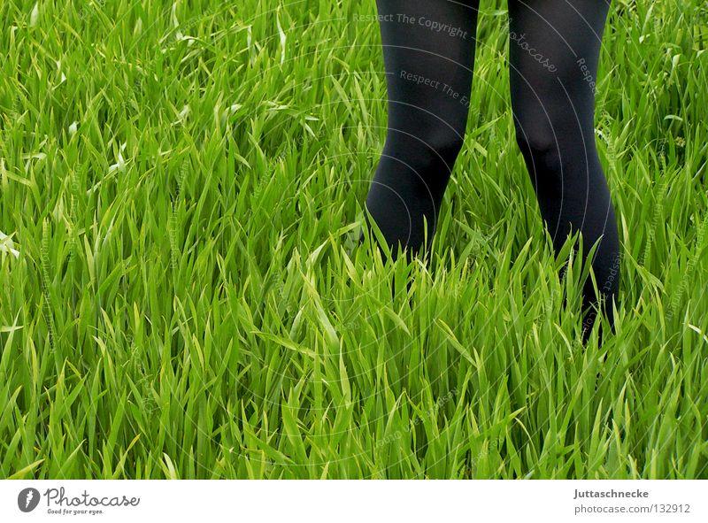 X grün schwarz Gras Wiese Feld Strumpfhose stehen gehen x-beinig Storch Frühling Wachstum säen Aussaat Feldarbeit Beine staksen anbauen Jungpflanze