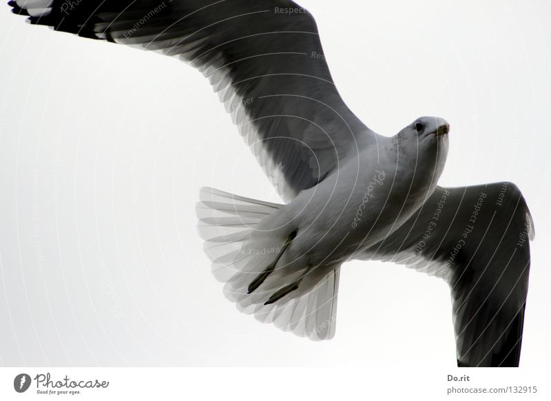 Freiflug in die Revolution!!! Himmel weiß Meer Wolken dunkel Bewegung grau Küste Vogel fliegen Ausflug ästhetisch Luftverkehr Flügel Romantik Vertrauen