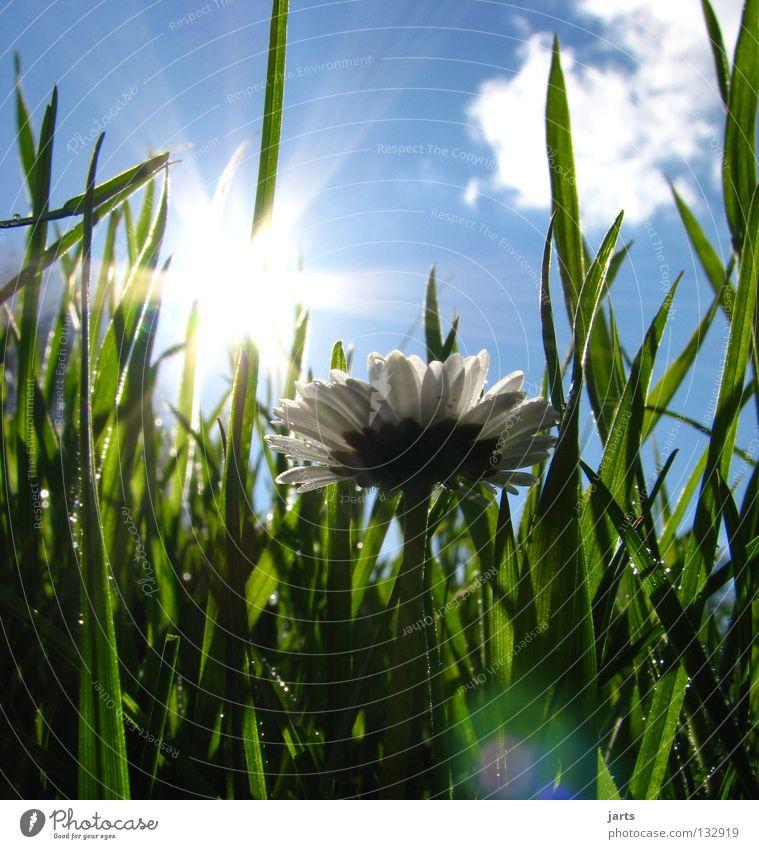 Tag 111 im Jahr 2008 Sonntag Frühling Wiese Gras Gänseblümchen Sonnenstrahlen Physik Wolken Zufriedenheit schön Graffiti Himmel Freude Gänsebümchen Wärme Glück