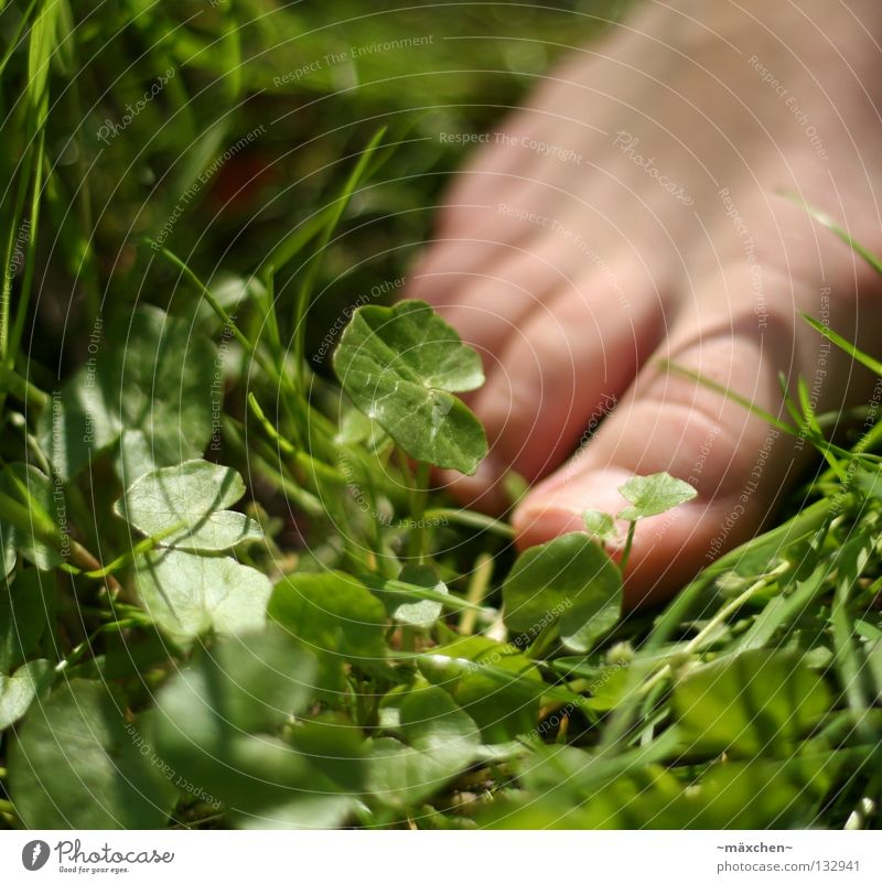 ohne Schuhe / without shoes Barfuß Frühling gehen Gesundheit Gras Halm grün Klee Kleeblatt Nagel Sommer Wiese Zehen Mensch entstehen Erholung Fuß Haut Kitzel