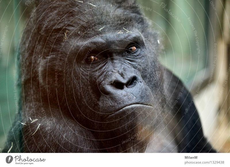 Ich sehe dich Tier Fell Zoo 1 Denken entdecken Traurigkeit Gefühle Mitgefühl Sehnsucht Heimweh Enttäuschung verstört Respekt Verbitterung Ärger Hoffnung Stolz