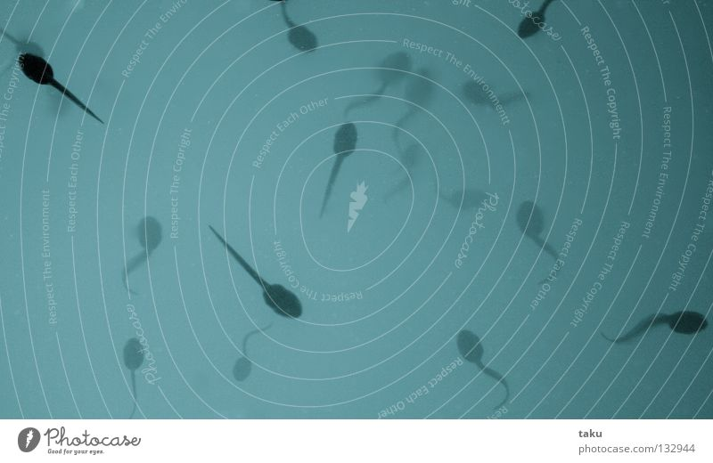 ÜBERLEBENSKÜNSTLER Wasser Leben Vogel Fisch Ei mehrere viele Frosch Teich Entwicklung Überleben Froschlurche Metamorphose Feindschaft Larve
