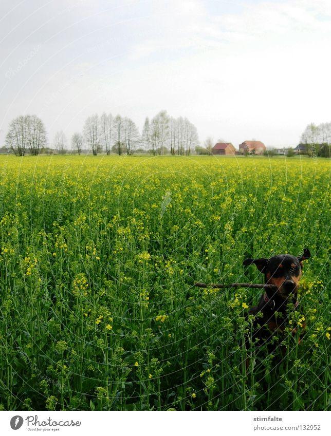 Frühlingsgefühle Himmel Baum Blume grün Freude Haus springen Spielen Blüte Bewegung Frühling Hund Feld Horizont Fröhlichkeit Elektrizität