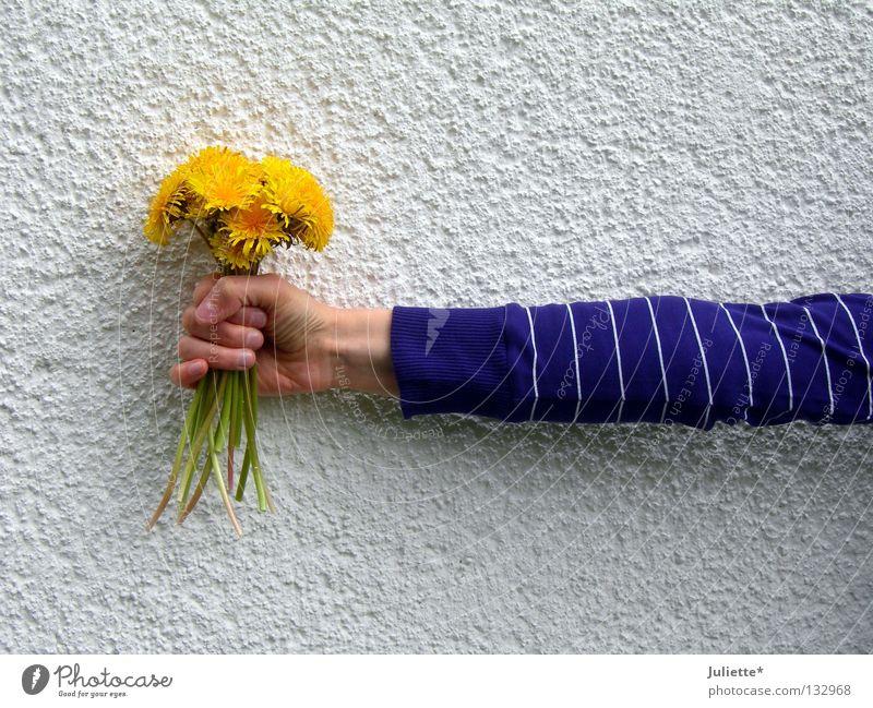 Blumenhalter Wand violett Stengel Löwenzahn Hand weiß grün stehen festhalten schenken vertikal Frühling Geburtstag Arme umklammern Gleb