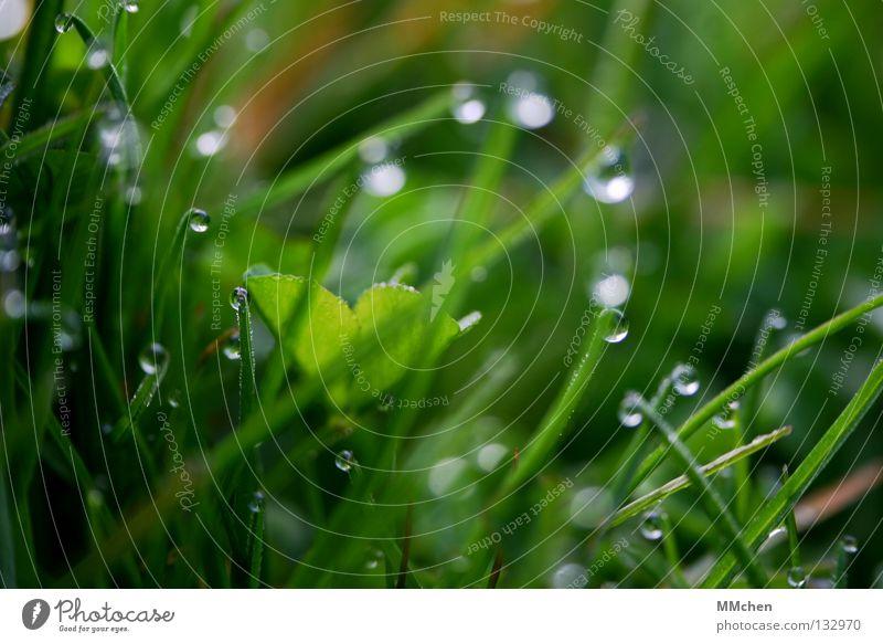 PerlenTropfen Natur Pflanze Wasser Leben Frühling Wiese Gras Lebensmittel Wassertropfen nass Bodenbelag Rasen Halm Tau feucht aufwachen