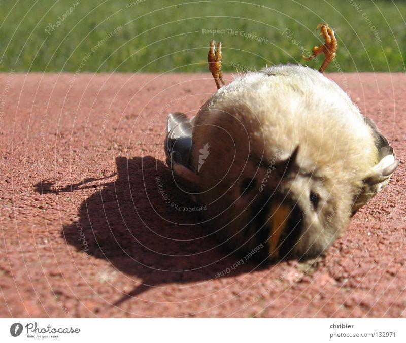 Still geworden... II Farbfoto Nahaufnahme Detailaufnahme ruhig Luftverkehr Fenster Totes Tier Vogel Flügel Krallen Glas fliegen Traurigkeit Hoffnung Trauer Tod