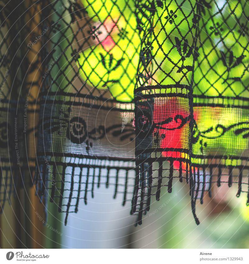 letzte Rose grün schön Blume rot Fenster natürlich Garten Wohnung Raum Häusliches Leben leuchten Dekoration & Verzierung Idylle Blühend retro Schönes Wetter