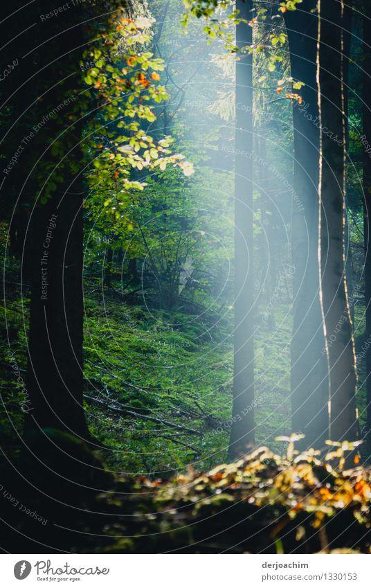 Morgenstund hat... Natur grün schön Sommer Baum ruhig Wald Holz außergewöhnlich Deutschland leuchten Sträucher warten genießen Lächeln Ausflug