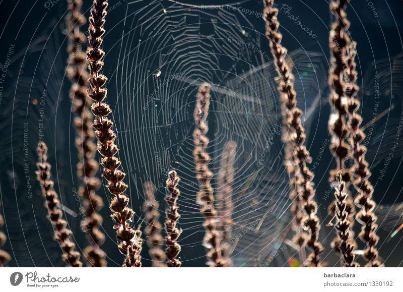 Halloween am Fischweiher Natur Pflanze Tier Wasser Herbst Gras Sträucher Teich Spinnennetz dunkel Stimmung bizarr Umwelt Gedeckte Farben Außenaufnahme Muster