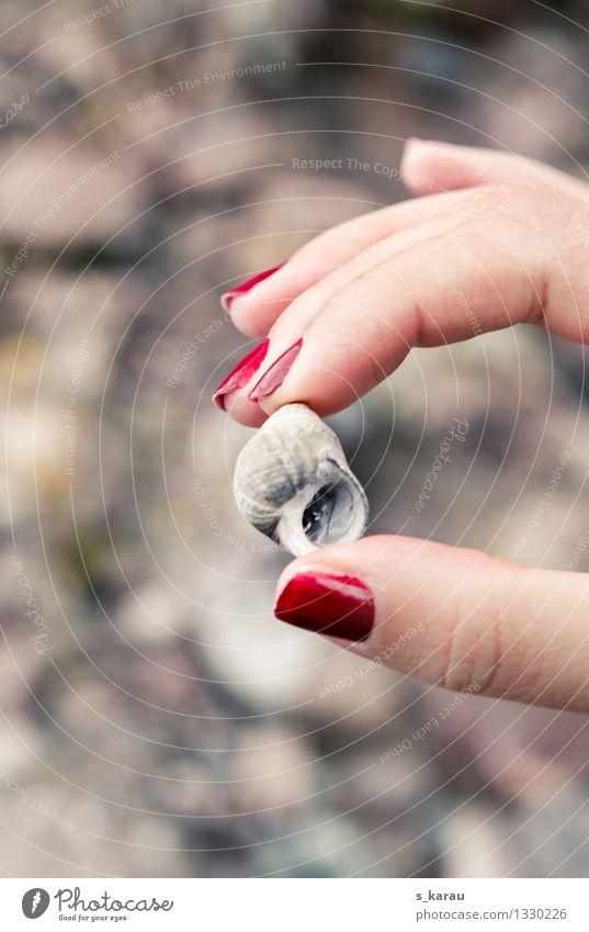 Strandgut Ferien & Urlaub & Reisen Ausflug Ferne Freiheit Sommer Meer Mensch feminin Hand Finger 1 Natur Sand Küste Muschel Muschelschale berühren einfach klein