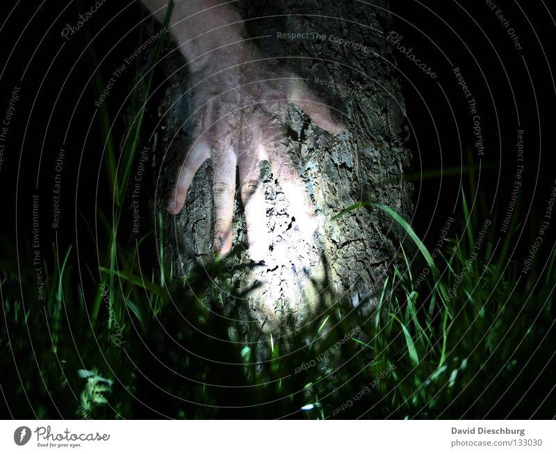 Baum des Lebens Hand Licht Gras Wiese Baumrinde Nacht Langzeitbelichtung Lampe Finger durchsichtig Freundschaft dunkel schwarz grün gruselig Horrorfilm tree