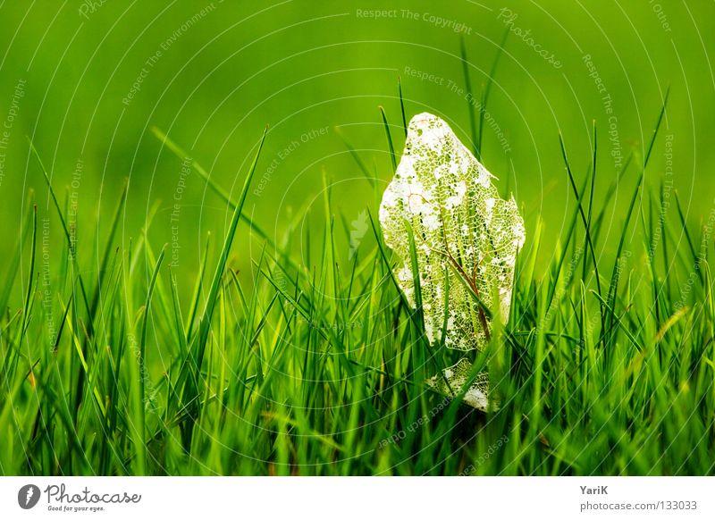 überbleibsel Natur grün Pflanze Sommer Freude Blatt Ferne Wiese Tod Gras Frühling Glück Kraft Hoffnung Fröhlichkeit Energiewirtschaft