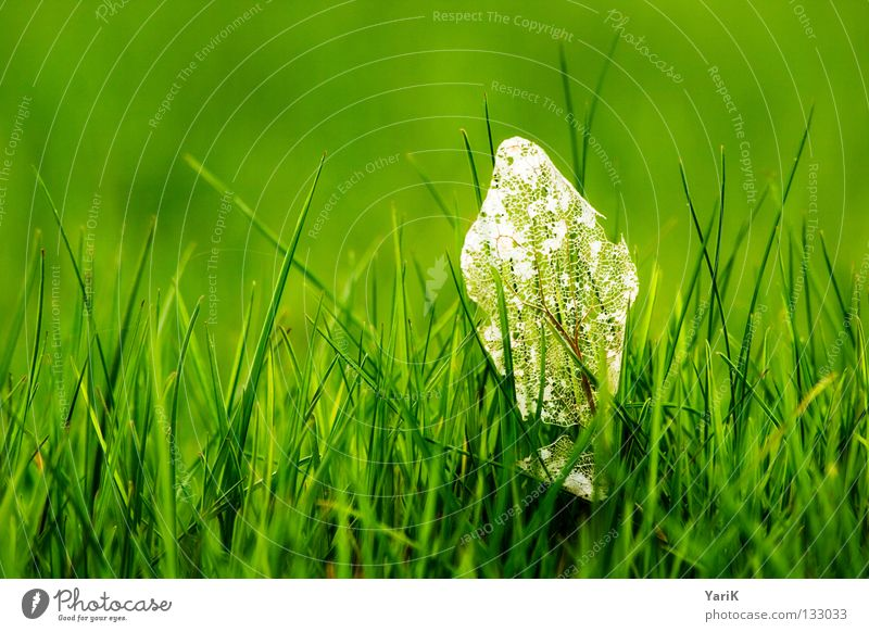 überbleibsel Wiese Gras Halm grün grasgrün dunkelgrün giftgrün Hoffnung Frühling Sommer Fröhlichkeit saftig Kraft Pflanze Makroaufnahme Ferne Blatt Verfall