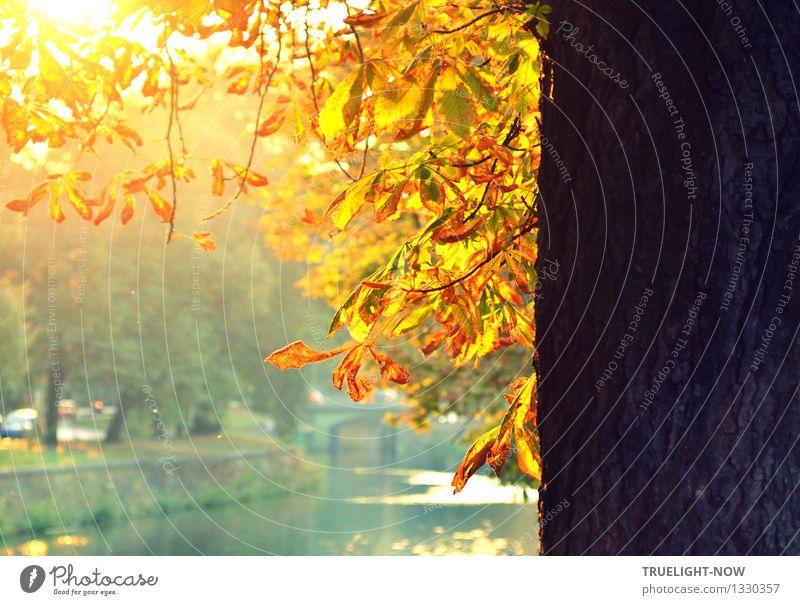 Gold trinken... Natur Pflanze grün weiß Baum Landschaft Blatt gelb Wärme Herbst natürlich grau braun Park orange gold
