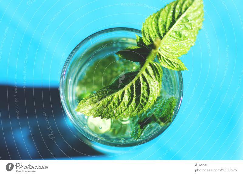 Heimkommen | erst mal eine Erfrischung Ferien & Urlaub & Reisen grün Erholung Blatt kalt Gesundheit Lebensmittel Freizeit & Hobby Glas Trinkwasser Getränk