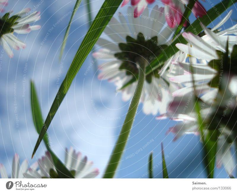 antidepressiva Natur Himmel weiß Blume grün blau Freude Wolken Farbe Gefühle Gras Frühling klein rosa Fröhlichkeit Klarheit