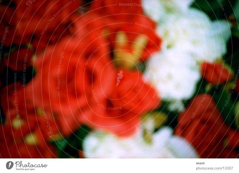 roses Rose Blumenstrauß