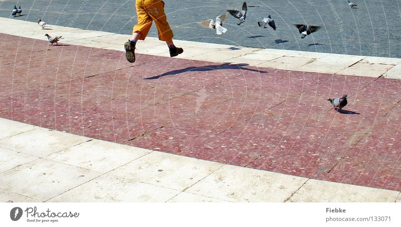 Taubenschreck Mensch Kind weiß Freude schwarz Tier Junge springen Spielen Freiheit grau Stein Fuß Schuhe Beine Vogel