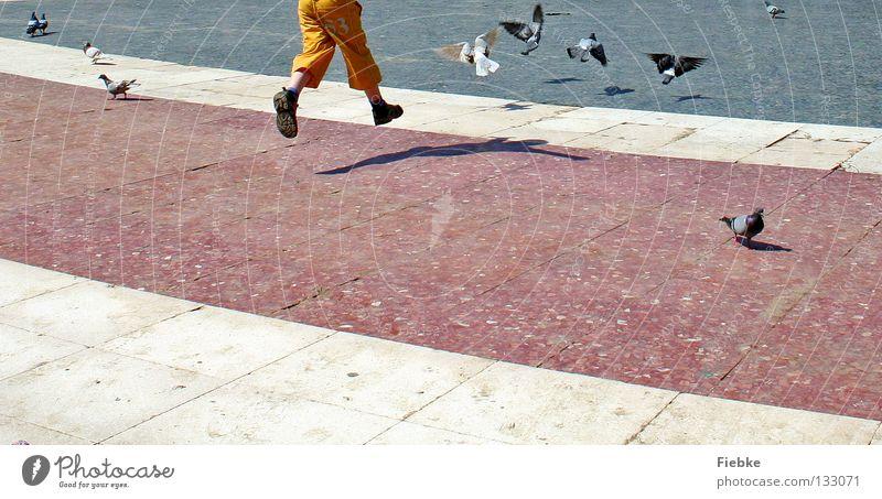 Taubenschreck weiß grau schwarz Vogel ausgestreckt Kind klein Krallen dreckig kaputt Platz Schuhe Strümpfe durcheinander Flucht springen Ausgelassenheit
