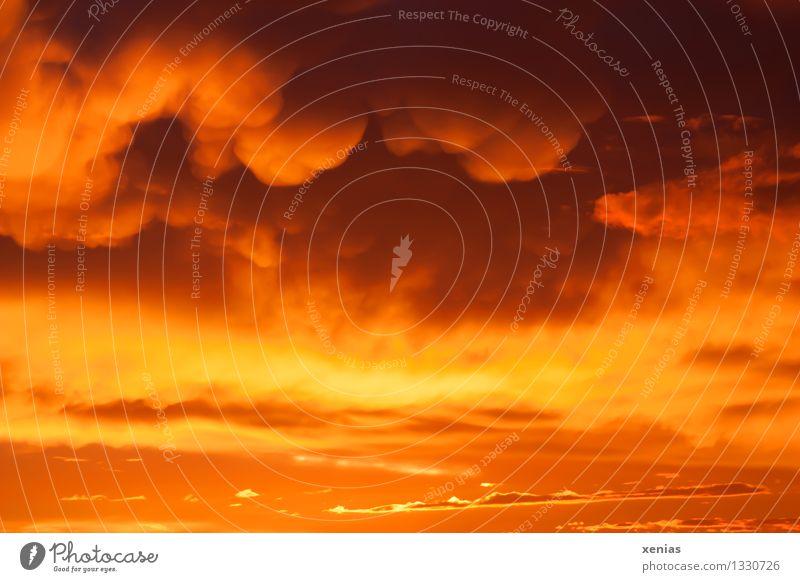 Himmelsfeuer Feuer Wolken Gewitterwolken Sonnenaufgang Sonnenuntergang Klima Wetter Regen orange Farbfoto Außenaufnahme Dämmerung