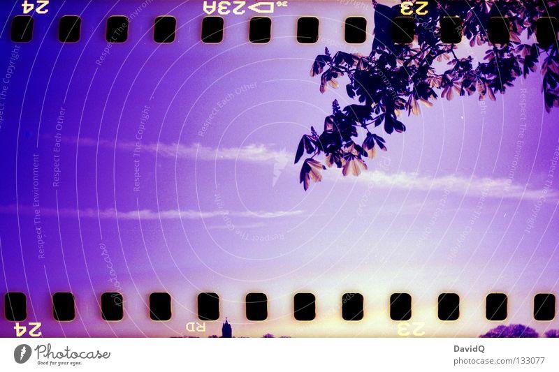 extract from a square Himmel Baum Wolken Blüte frisch Ast zart Blühend Jahreszeiten Zweig Blütenknospen zierlich aufwachen Kastanienbaum Filmmaterial Filmperforation