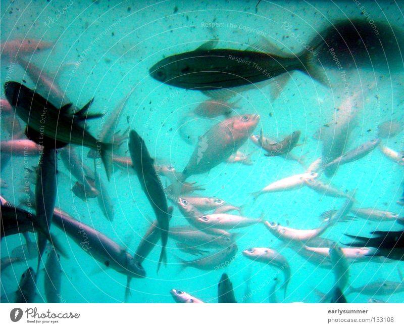 50 blau Wasser Ferien & Urlaub & Reisen schön Sonne Sommer Meer Strand Tier Ernährung träumen Insel nass Ausflug Fisch Bad